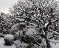 太宰府,雪景色,
